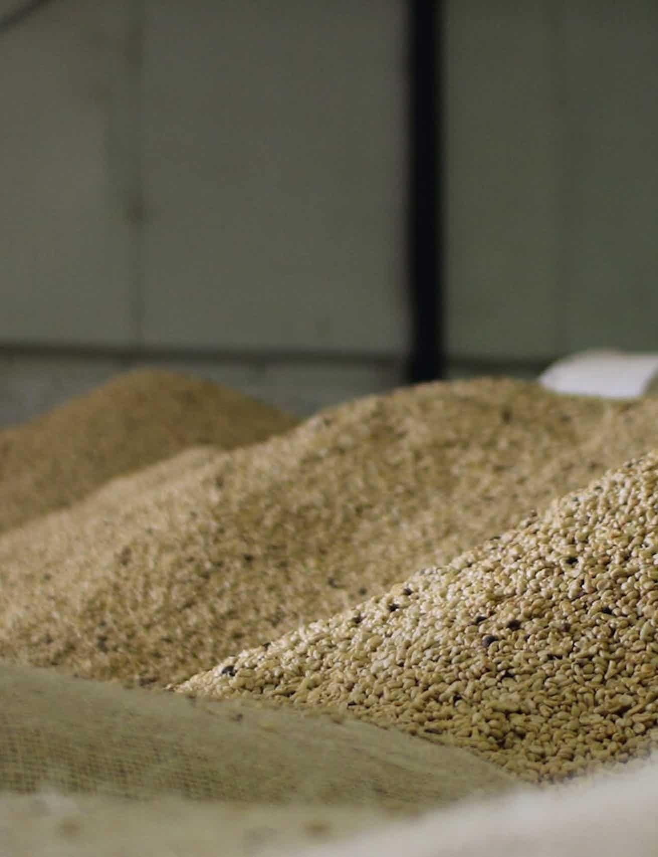 Processing Coffee at Origin